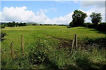 H4178 : Gortnacreagh / Killinure by Kenneth  Allen