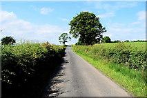 H4178 : Tree along a minor road, Gortnacreagh by Kenneth  Allen