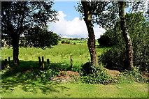 H4178 : Trees, Gortnacreagh by Kenneth  Allen