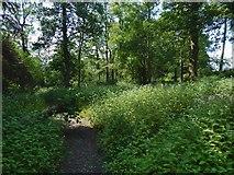 NS3578 : Path near Kilmahew Castle by Lairich Rig