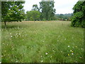TQ2730 : Front Meadow at High Beeches Woodland and Water Gardens by Marathon