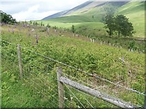NY2825 : The ascent to Latrigg [17] by Michael Dibb