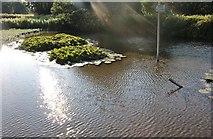 TL4339 : Pond by Heydon Lane by David Howard