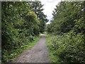 NZ3435 : The Kelloe Way by David Robinson