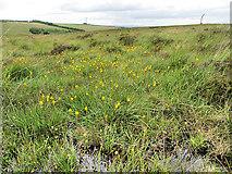 S2618 : Bog Flowers by kevin higgins