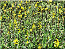 S2618 : Upland Flowers by kevin higgins