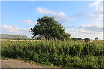 TL4135 : Hedgerow in Morrice Green by David Howard