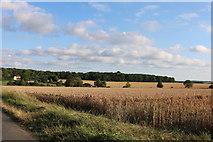TL3933 : Fields in Anstey by David Howard