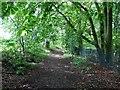SD6710 : Footpath through a wood by Philip Platt