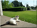 SO5968 : Cat inside the Pavilion at Tenbury Wells Bowling Green by Fabian Musto