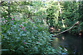 SU3515 : Himalayan Balsam by the River Test by Hugh Venables