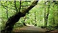 J4682 : Path, Crawfordsburn Country Park (August 2019) by Albert Bridge