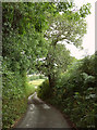 SX7671 : Lane to Ashburton by Derek Harper