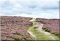 NZ0239 : Hill road through flowering heather by Trevor Littlewood