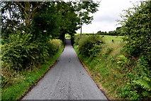 H5572 : Roeglen Road by Kenneth  Allen
