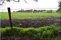H5472 : Muddy field, Bracky by Kenneth  Allen