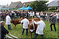 HY4510 : Judging cattle at the Orkney County Show by Bill Boaden