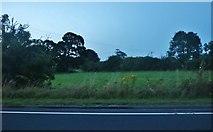 TA1465 : Field by Bridlington Bay Road, Carnaby by David Howard