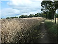 SK3998 : Public footpath from Elsecar to Lee Wood by Christine Johnstone