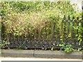 SK5640 : Mount Vernon Terrace, Waverley Street, Nottingham – detail by Alan Murray-Rust