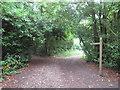 TQ1551 : North Downs Way, near Dorking by Malc McDonald