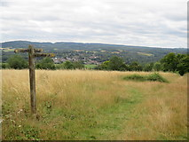 TQ1450 : Paths on the North Downs, overlooking Dorking by Malc McDonald