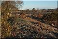 SY9484 : Middlebere Heath by Derek Harper