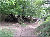 TQ1148 : Cattle on the path, near Dorking by Malc McDonald