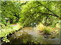 V9590 : Killarney National Park, Deenagh River by David Dixon