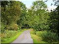 V9589 : Track in Killarney National Park by David Dixon