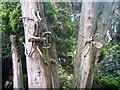 NY3606 : Rydal Hall & Gardens [10] by Michael Dibb