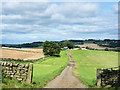 NY9067 : Farm access road passing through gateway by Trevor Littlewood