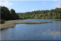 SE5976 : Lower Fish Pond by Chris Heaton