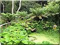 SZ1091 : Bog garden of Boscombe Chine Gardens by David Hawgood