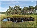 NH9661 : Pond on the shoreline at The Gut by valenta