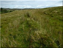 NS2471 : An old boundary by Lairich Rig