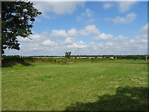 ST7981 : Grazing near Acton Turville by JThomas
