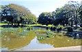 TQ3204 : Queens Park Pond - Aug 2019 by Paul Gillett