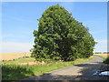 TQ3211 : Ditchling Road, near Brighton by Malc McDonald