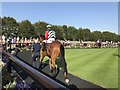 TL6161 : Drummond Warrior in the parade ring at The July Course, Newmarket by Richard Humphrey