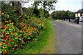 H5167 : Nasturtiums along Urbalshinny Road by Kenneth  Allen