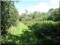 SH4956 : Bryngwyn Branch slate trail, near Bryngwyn by Christine Johnstone