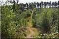 NT4329 : Path in Tibbie Tamson's Plantation by Jim Barton
