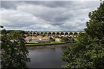 NT9953 : River Tweed by Mark Anderson
