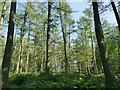 SE1953 : Woodland on the eastern bank of Swinsty Reservoir by Stephen Craven