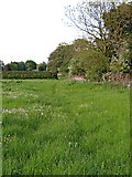 SK1409 : Pasture south-west of Huddlesford in Staffordshire by Roger  Kidd