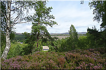 NH8721 : A Glimpse of the River Dulnain by Anne Burgess
