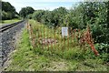 SH5059 : Controlling Japanese knotweed at Tryfan Junction by Christine Johnstone