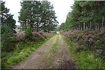 NH8421 : National Cycle Route No 7 by Anne Burgess