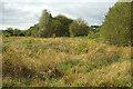 SX9066 : Nightingale Park by Derek Harper